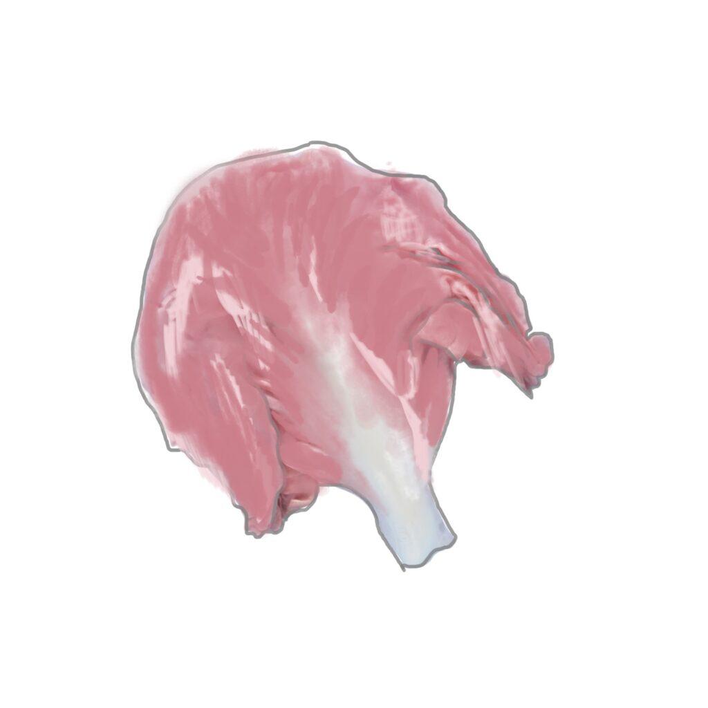 Le Delizie del monte Baldo - radicchio rosa